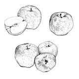 Ink apple sketches set. Hand drawn ink apple sketches set Royalty Free Stock Photos