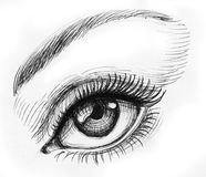 Beautiful female eye. Ink black and white illustration of a beautiful looking female eye with a long lashes Stock Image