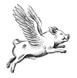 Flying pig. Ink black and white illustration of a flying winged pig Stock Photos
