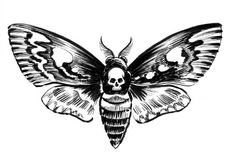 Deadly moth. Ink black and white illustration of a night butterfly with a human skull Royalty Free Stock Photo