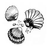 Seashells. Ink black and white illustration of a seashells Royalty Free Stock Photography