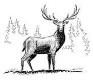 Wild deer. Ink black and white illustration of a wild deer in the forest vector illustration