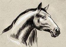 Ink sketch of a horse. Ink and chalk drawing of a beautiful horse head Royalty Free Stock Images