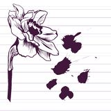 Ink drawing daffodil Royalty Free Stock Photo