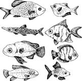 Ink drawing fishes Stock Image