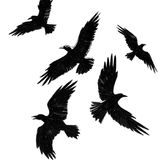 Flying crows. Ink drawing of a flying crows Stock Illustration