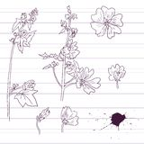 Ink drawing  mallow flowers Stock Photo