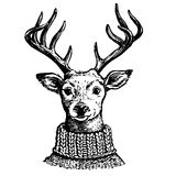 Ink drawing of reindeer in knit sweater stock photography