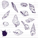 Ink drawing of shells. Vector illustration Stock Photography