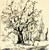 Ink drawing tree Stock Photo