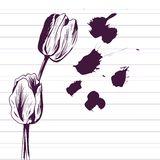 Ink drawing tulips Stock Photos