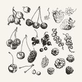 Ink drawn collection of berries Royalty Free Stock Photos