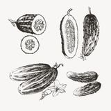 Ink drawn cucumbers Royalty Free Stock Photography