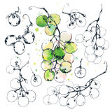 Ink drawn grapes Stock Photography