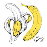 Ink drawn illustration of banana fruit Royalty Free Stock Photos