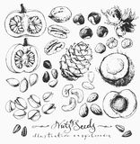 Ink Drawn Nuts ans Seeds Royalty Free Stock Image