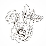 Ink drawn rose with leaves. Ink drawn rose branch with leaves Royalty Free Stock Photography