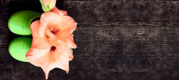 Ink gladiolus flower in green children boots, top view, copy space, gardening concept. Pink gladiolus flower in green children boots on dark wooden background stock photography