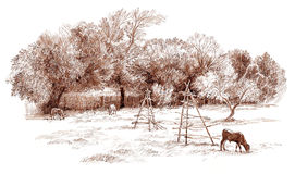 Ink hand drawing country landscape. Pen hand drawing country landscape Stock Photo