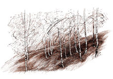Ink hand drawing landscape with a birch tree forest Stock Photo