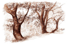 Ink hand drawing trees landscape Royalty Free Stock Photography