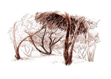 Ink hand drawing trees landscape Royalty Free Stock Images