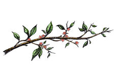 Ink hand drawn branch with pink flowers Stock Image