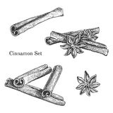 Ink hand drawn cinnamon set. Engraving outline traditional style Stock Photography