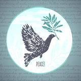Ink hand drawn dove with olive branch illustration Stock Image