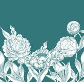 Ink hand drawn illustrations of ornate peonies Stock Photo