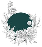 Ink hand drawn illustrations of ornate peonies Stock Images