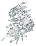 Ink hand drawn illustrations of ornate peonies Royalty Free Stock Photo