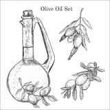 Ink hand drawn olive oil set. It can be used like design elements for traditional stile packaging, card, lables etc Royalty Free Stock Photo