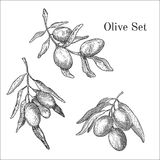 Ink hand drawn olive set Stock Image