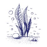 ink hand drawn seaweed. Vintage engraved marine plant with bubbles and stones. Element of sea or ocean bottom. vector underwater