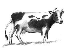 Cow on the field. Ink illustration of a black and white milk cow Royalty Free Stock Photo