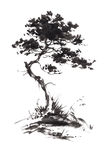 Ink illustration of growing pine tree. Sumi-e stile. Royalty Free Stock Images