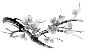 Ink illustration of sakura. Sumi-e style. Ink illustration of blooming branches of cherry tree. Sumi-e, u-sin, gohua painting style. Silhouette made up of brush Royalty Free Stock Images