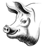 Smiling pig. Ink illustration of a smiling pig head vector illustration