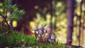 Ink Mushrooms moss royalty free stock photography