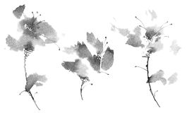 Ink painted flowers. Ink illustration of flowers. Sumi-e, u-sin painting Royalty Free Stock Photography