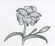 Ink painting Fairytale flower Royalty Free Stock Photo