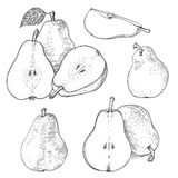 Ink pears sketches set. Hand drawn ink pears sketches set. Outline retro style illustration. Isolated. It can be used like design elements for package, books Stock Photos