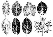 Free Ink Prints Of Natural Leaves Royalty Free Stock Image - 160335056