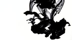 Ink in water, black watercolor ink drops transition on white background stock footage