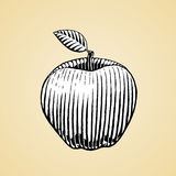 Ink Sketch of an Apple with White Fill Stock Photos