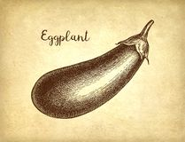 Ink sketch of eggplant. On old paper background. Hand drawn vector illustration. Retro style royalty free illustration