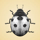 Ink Sketch of a Ladybug with White Fill Stock Photo
