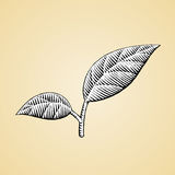 Ink Sketch of Leaves with White Fill Royalty Free Stock Photo