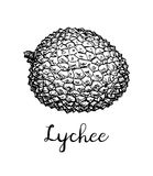 Ink sketch of lychee fruits. Royalty Free Stock Images